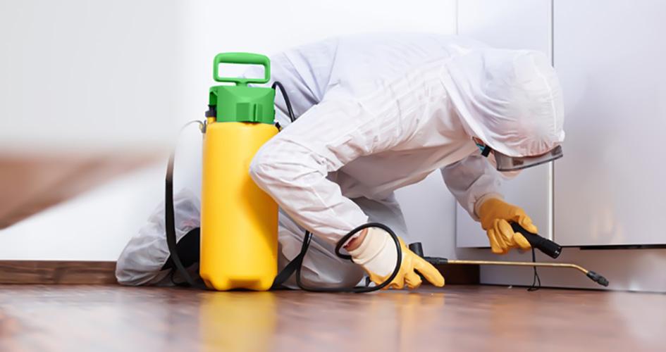 Desinsetiza Clean - ALPHA CLEAN Controle de Pragas / Dedetizadora (48)3439-3119 Criciúma