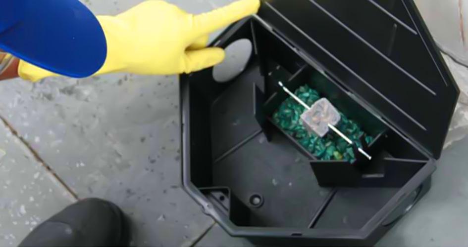 Desratiza Clean - ALPHA CLEAN Controle de Pragas / Dedetizadora (48)3439-3119 Criciúma