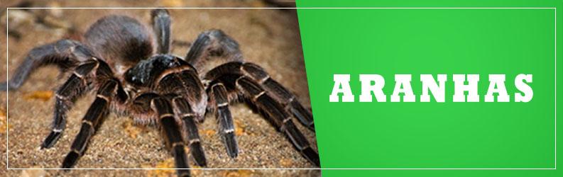 aranhas-ALPHA-CLEAN-Controle-de-Pragas-Dedetizadora-criciuma-içara