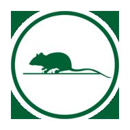 pragas-ratos-ALPHA-CLEAN-Controle-de-Pragas-Dedetizadora-criciuma-içara