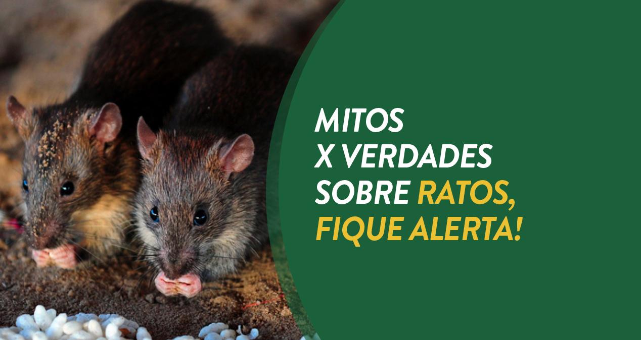 Mitos e Verdade sobre os ratos